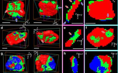 New Technique Reveals 3D Nanoscale Chemical Reactions Inside Batteries
