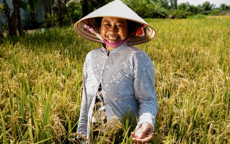 News Update on Rice Farmers Research: May – 2019