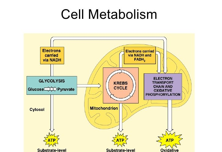 News Update on Cell Metabolism Research: May – 2019