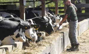 News Update on Dairy Farmers Research: May – 2019