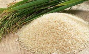 News Update on Rice Cultivar Research: May – 2019