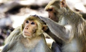 Monkeys reveal new clues toward elusive HIV vaccine and cure