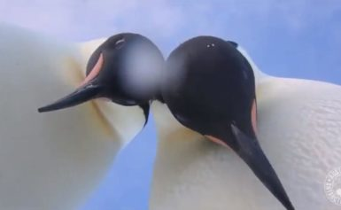 Antarctic Penguins Find Research Camera, Proceed to Take Most Adorable Selfies