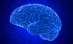 Older adults grow just as many new brain cells as young people