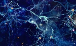 Newly Developed Gel Can Help Regrow Brain Tissue After Stroke (In Mice)