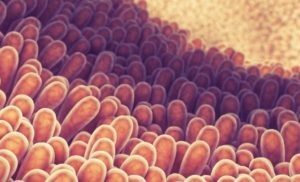 Gut Microbes Could Play a Role in Heart Disease Too