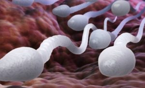 Scientists Just Discovered a Brand New Part of Sperm That Could Explain Infertility