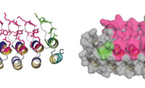 Using Mimics to Get Around Antibodies' Limitations