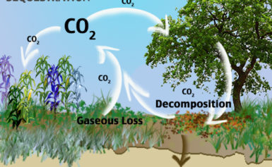 Press Release on Carbon Sequestration Research: March – 2019