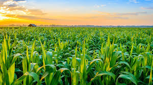 News  Update on Agriculture Research: April – 2019