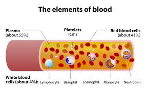 News  Update on Blood Plasma Research: May – 2019
