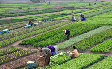 News Update on Smallholder Farmers Research: May – 2019