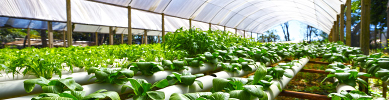 News Update on Sustainable Production Research: May – 2019