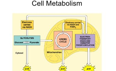 News Update on Cell Metabolism Research: June – 2019