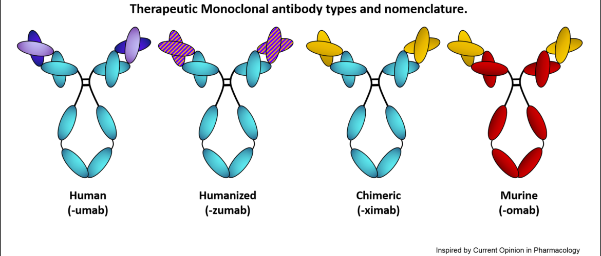 News Update on Monoclonal Antibodies Research: Aug – 2019