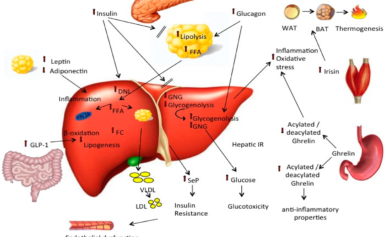 News Update on Fatty Liver Research: Aug – 2019