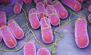 News Update on Salmonella Research: Jan – 2020