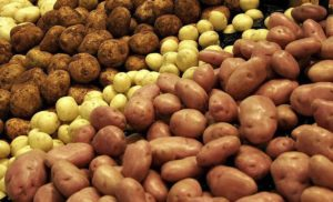 Latest News on Potato Production Research: Feb – 2020